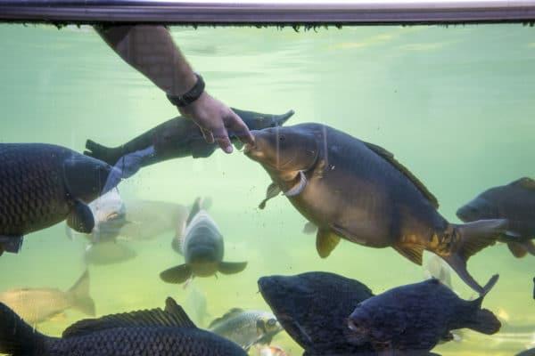 Aquarium aux poissons Domaine de Vendresse