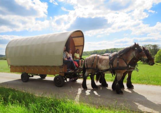 Balade en famille et en roulotte avec deux chevaux dans les Crêtes