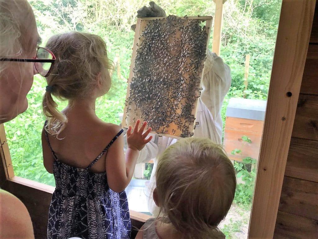 Animation pour les enfants au Rucher du Marcassin de la fabrication du miel