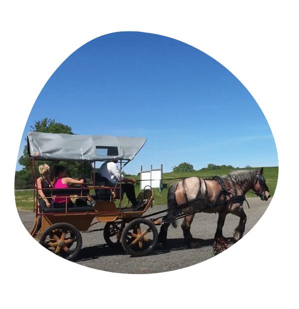 bulle d'image calèche tirée par cheval pour balade